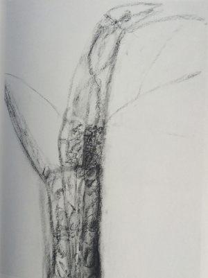 Vogel, Kohle auf Bütten, 1987